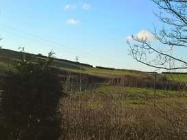 Exmoor Blue Bird - Image #1