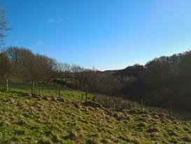 Exmoor Blue Bird - Image #3