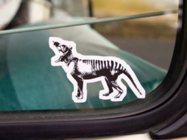 The Albino Thylacine- 5 speed MANUAL - Image #17