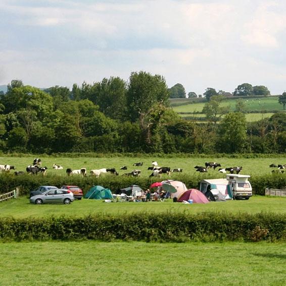 Bridge Farm near to Glastonbury Festival